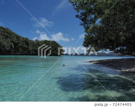 パラオの美しい海とマングローブ林の木陰 72474405