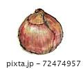 和テイストな「玉ねぎ」のイラスト 72474957