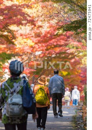 紅葉シーズンの公園で紅葉を見ている観光客の姿 72475941