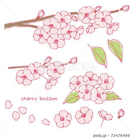 手書き風の桜の花、桜の木の枝 72476489