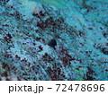 パラオのインドカエルウオ 72478696
