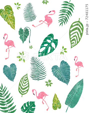 フランミンゴのいる南国の葉のかわいいイラスト 72481175