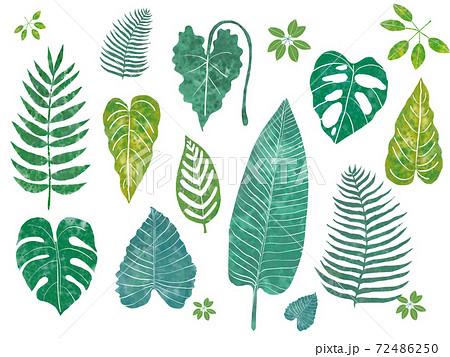 植物のオシャレでかわいいイラスト 72486250