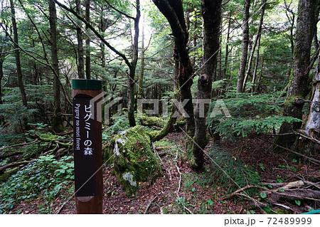 池の平湿原の見晴歩道にあるピグミーの森付近 72489999