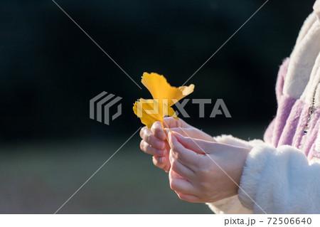 秋の公園でイチョウの落ち葉を持っている女性の両手の姿 72506640