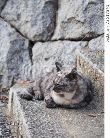 石段に座る灰色と白色さび柄の野良猫 72517841