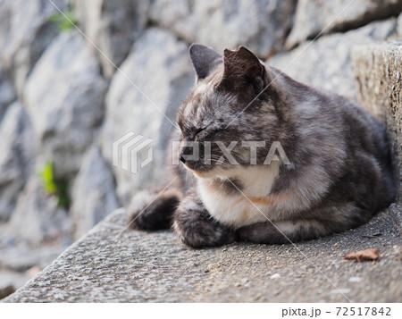 石段に座る灰色と白色さび柄の野良猫 72517842