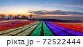マザー牧場 イルミネーション 72522444