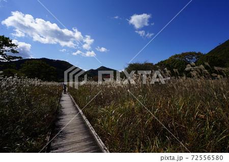 群馬県 榛名公園のゆうすげのみち 72556580