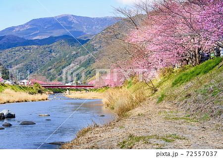 河津川河川敷と河津桜、その奥の山々 72557037