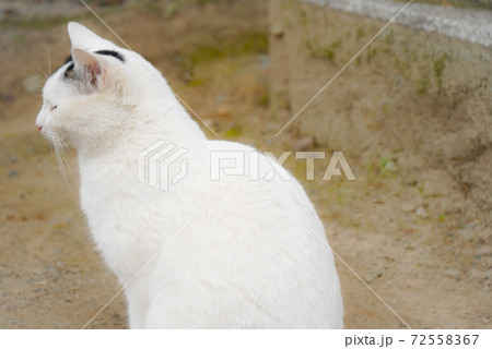 伏見稲荷大社 お稲荷さんにいた猫 72558367