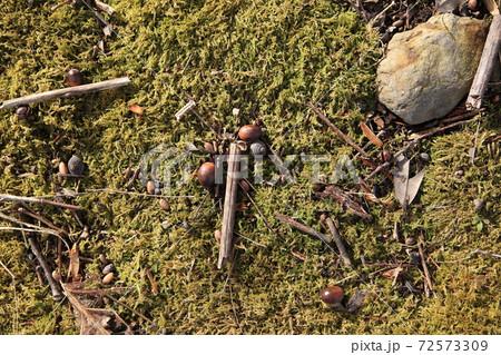 緑の植物の上にどんぐりや木の枝などの小物 72573309