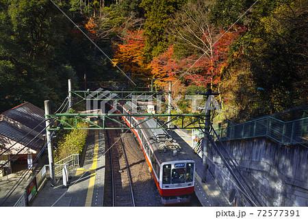 箱根登山鉄道1000形【秋の塔ノ沢駅】神奈川県 72577391