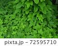 夏の玉川上水緑道沿いの風景(東京・2020年夏) 72595710