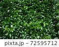 夏の玉川上水緑道沿いの風景(東京・2020年夏) 72595712