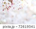 満開の桜背景に左上接写桜の花(コピースペースあり) 72619341