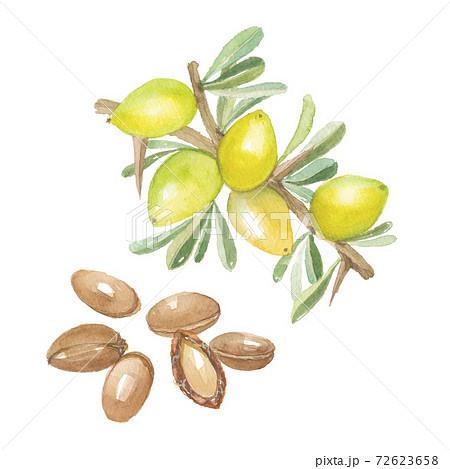 アルガン 実と種子 72623658
