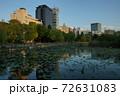 上野公園 不忍池の夕暮れ リフレクション 72631083