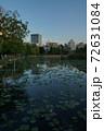 上野公園夕景 不忍池の反射 72631084