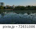 上野公園夕景 不忍池 リフレクション 72631086