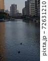 芝浦三丁目の昼下がり 運河を進む水鳥 72631210