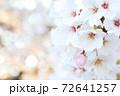 満開の桜背景右側接写サクラの花(コピースペースあり) 72641257