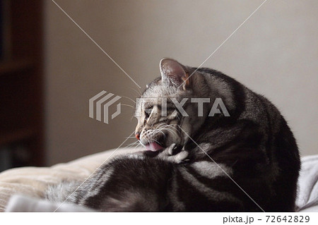 ベッドの上で毛づくろいする猫 アップ 72642829