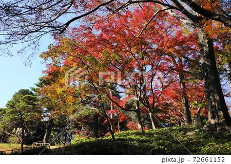 12月 国分寺40庭園内の紅葉(東京都立)殿ヶ谷戸庭園 72661152
