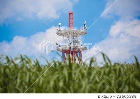 夏風の渡る河川敷の向こうにそびえる電波塔 72665538