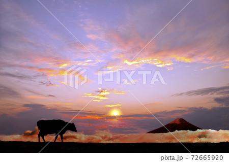 オレンジの空と富士山を背景に高原の牧場を歩む牛のシルエット 72665920