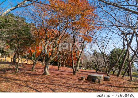 愛宕神社の入口で見れる紅葉(笠間・吾国愛宕ハイキングコース) 72668436