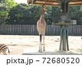 キリンの後ろ姿 72680520