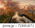笠松河津桜ロード 日の出 72681671
