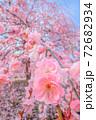 鈴鹿の森庭園 72682934