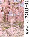 鈴鹿の森庭園 花びらの絨毯 72683043