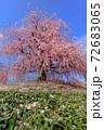 鈴鹿の森庭園 72683065