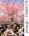 鈴鹿の森庭園 72684178
