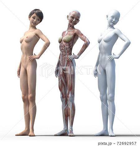 筋肉標本 女性 perming3DCGイラスト素材 72692957