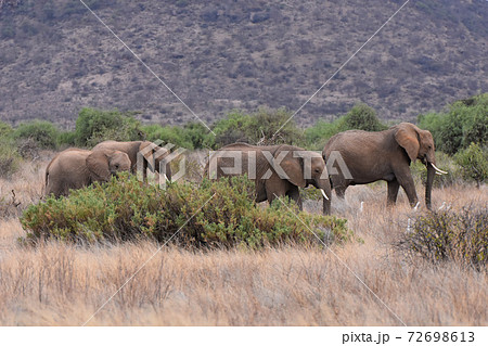 サンブル自然保護区の景色(ケニア) 72698613