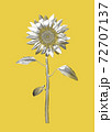Monochrome sunflower vintage illustration drawing isolated on yellow BG 72707137