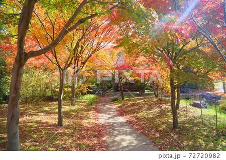 秋の公園 綺麗なイロハモミジの散歩道 72720982