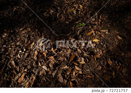 降り積もる落ち葉に射す木洩れ日  72721757