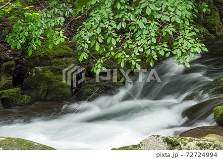 緑の枝葉の下の川の流れ 72724994