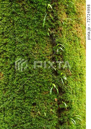 シダとコケの生えた木の幹のアップ 72724998