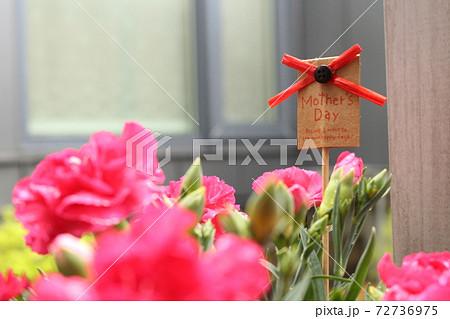中庭を彩る母の日のカーネーション 72736975