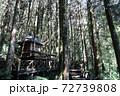 林 森 樹林 72739808