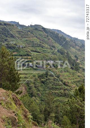 フィリピン、ルソン島山岳部の段々畑 72743317
