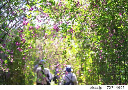 【東京都】府中市郷土の森公園 萩のトンネル 72744995