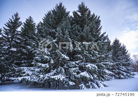 手稲前田森林公園にて早朝に撮影した雪化粧 72745190