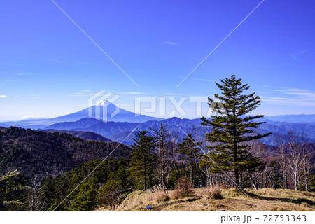 青空と樹林と雪化粧する富士山(牛奥ノ雁ヶ腹摺山頂上より) 72753343